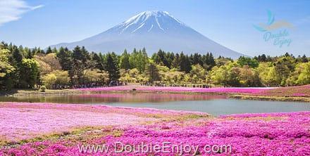 DE577 : โปรแกรมทัวร์ญี่ปุ่น โตเกียว ฟูจิ หุบเขาโอวาคุดานิ ทุ่งพิงค์มอส 5 วัน 3 คืน (XJ)