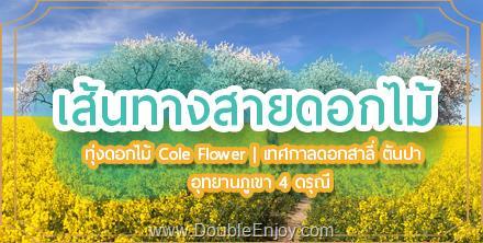 DE962 : ทัวร์จีน เส้นทางสายดอกไม้ ทุ่งดอก Cole Flowers เทศกาลดอกสาลี่ ตันปา อุทยานภูเขาสี่ดรุณี 6 วัน 5 คืน (TG) [ไม่เข้าร้านรัฐบาล]