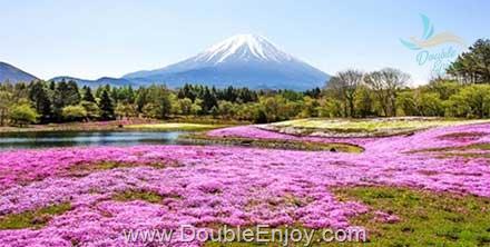 DE988 : โปรแกรมทัวร์ญี่ปุ่น โตเกียว ภูเขาไฟฟูจิ ทุ่งพิงค์มอส 4 วัน 3 คืน (XJ)