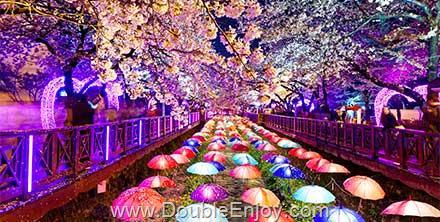 DE393 : โปรแกรมทัวร์เกาหลี ปูซาน เทศกาลดอกซากุระ สวนสนุก E-WORLD 5 วัน 3 คืน (TW)