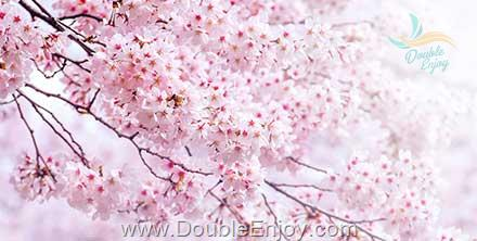 DE832 : โปรแกรมทัวร์เกาหลี สวนสนุกเอเวอร์แลนด์ เทศกาลดอกซากุระ 5 วัน 3 คืน (XJ)