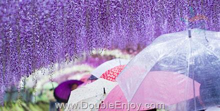 DE222 : โปรแกรมทัวร์ญี่ปุ่น ฟุกุโอกะ เปปปุ เทศกาลชมดอกวิสทีเรีย 5 วัน 3 คืน (SL)