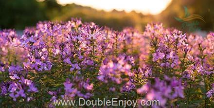 DE687 : โปรแกรมทัวร์จีน คุนหมิง ตงชวน สวนดอกไม้เอ็กซ์โป 4 วัน 3 คืน (8L)
