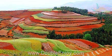 DE260 : โปรแกรมทัวร์จีน คุนหมิง ตงชวน ภูเขาหิมะเจี้ยวจื่อ 4 วัน 2 คืน (FD)