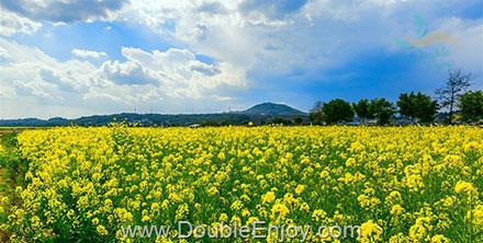 DE287 : ทัวร์เฉินตู ภูเขาสี่ดรุณี ตันปา จินชวน เทศกาลดอกสาลี่ + ทุ่งดอกน้ำมัน + ดอกท้อ [ไม่เข้าร้านรัฐบาล] 6 วัน 3 คืน (8L)